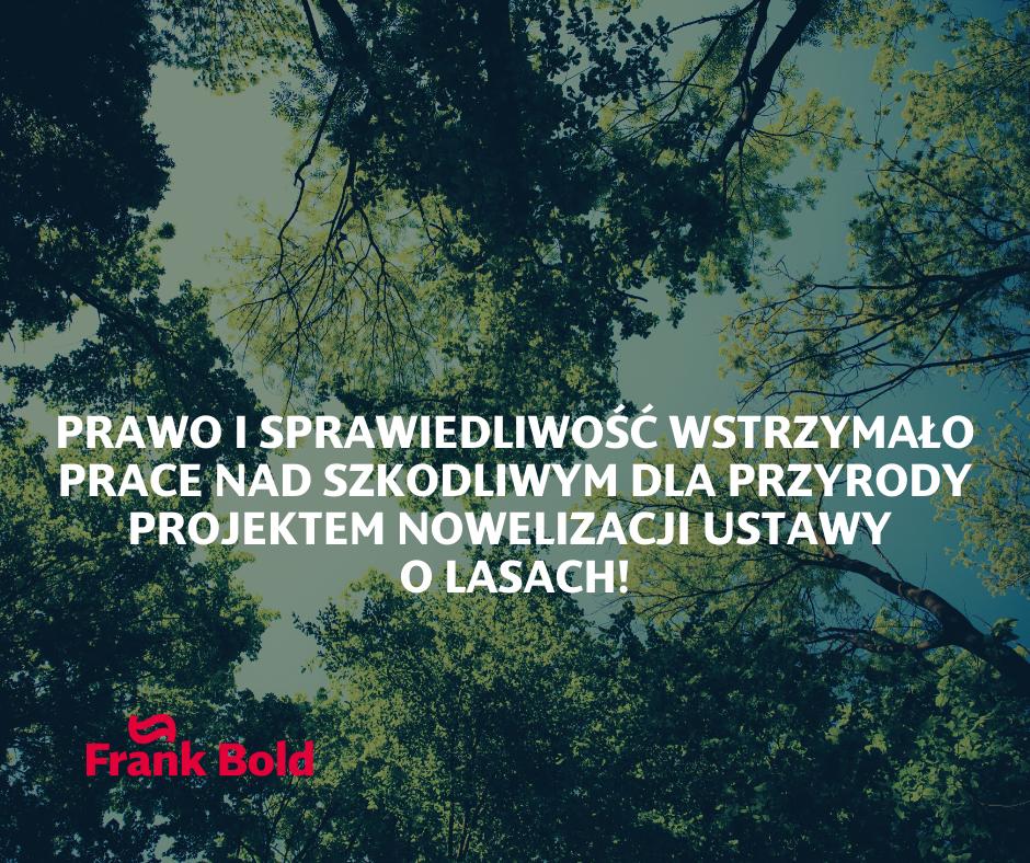Społeczna mobilizacja w obronie przyrody wstrzymała fatalny projekt nowelizacji ustawy o lasach!