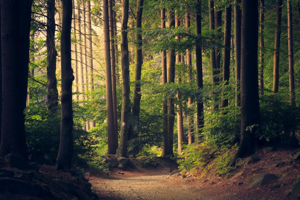 Sukces obrońców i obrończyń lasów. PiS wycofuje kontrowersyjny projekt ustawy